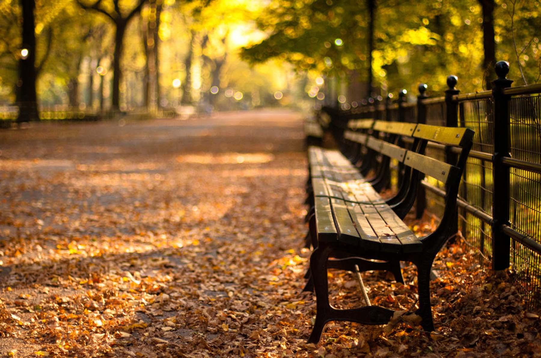 143610__central-park-new-york-autumn-sunset-new-york-sunset-park_p